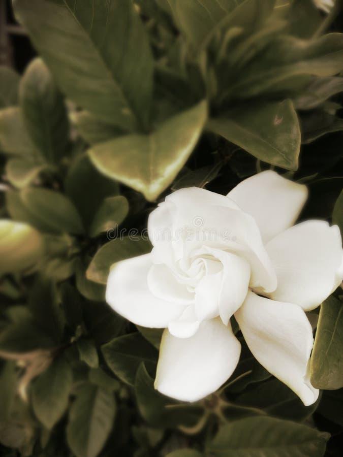 Annata del fiore fotografia stock libera da diritti