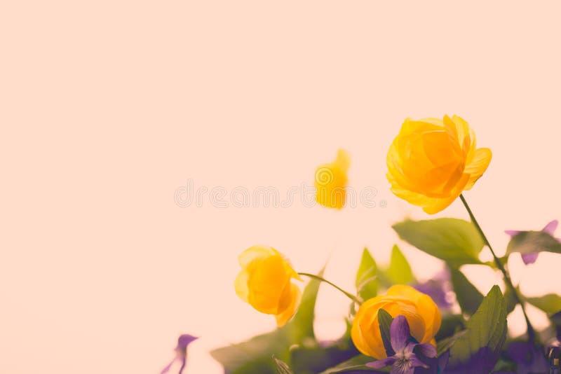 Download Annata Del Fiore E Bello Gialli Fotografia Stock - Immagine di beige, petalo: 55365824