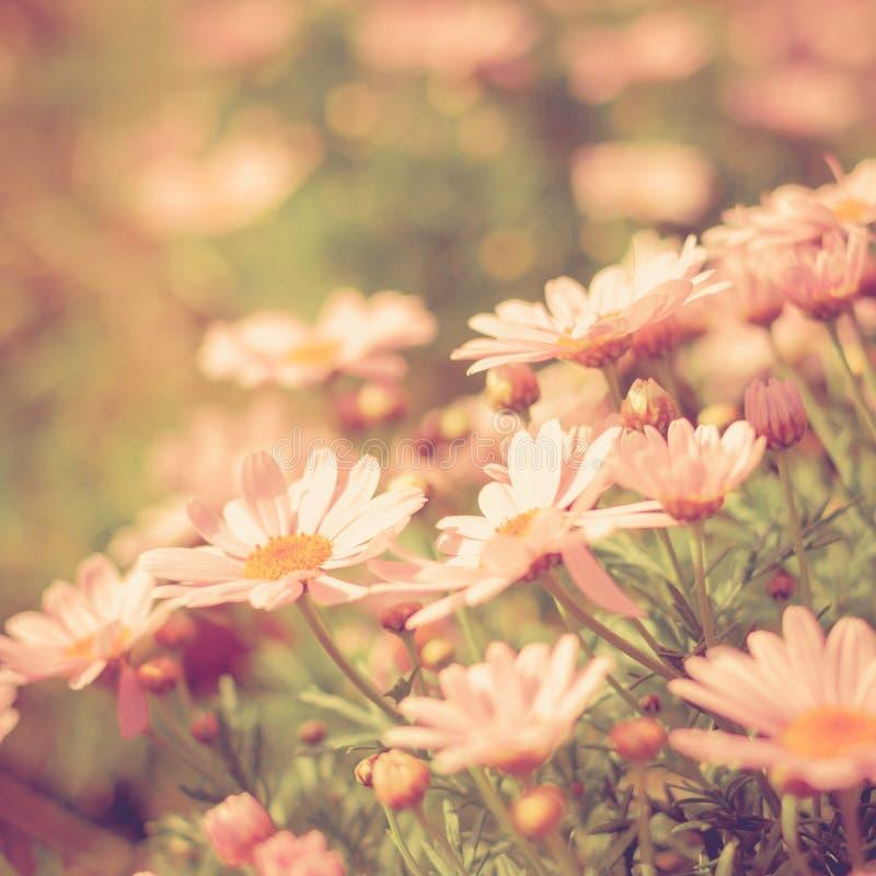 Annata del prato del fiore retro fotografia stock libera da diritti