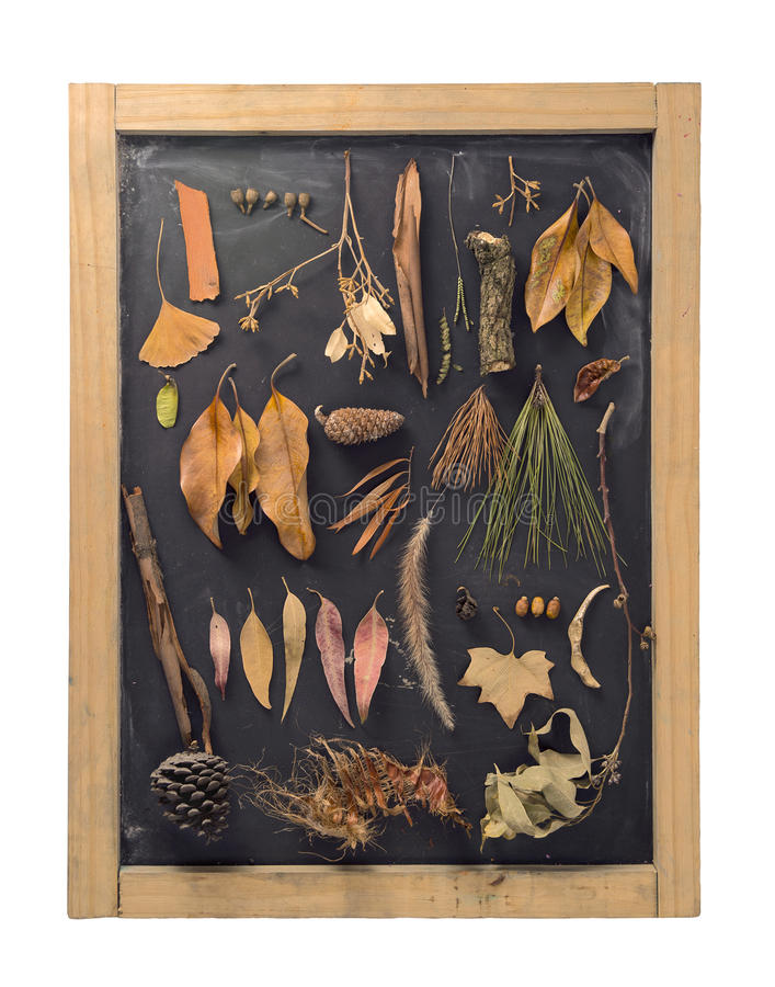 Annata della lavagna della foglia di autunno della composizione in caduta immagine stock