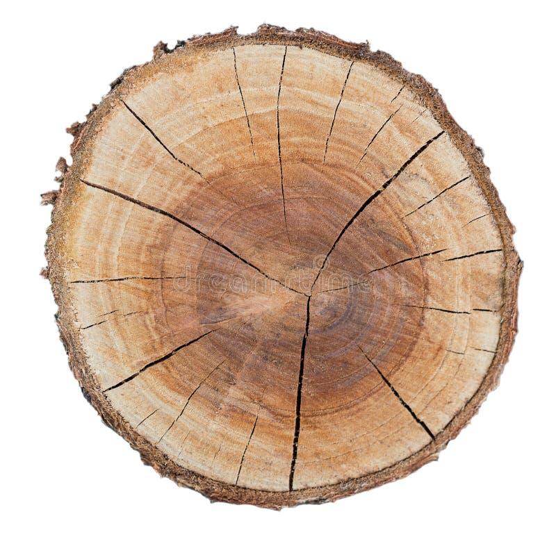 Anneau en bois de texture image libre de droits