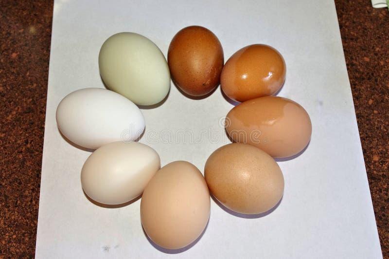 Anneau multicolore des oeufs de ferme photo libre de droits