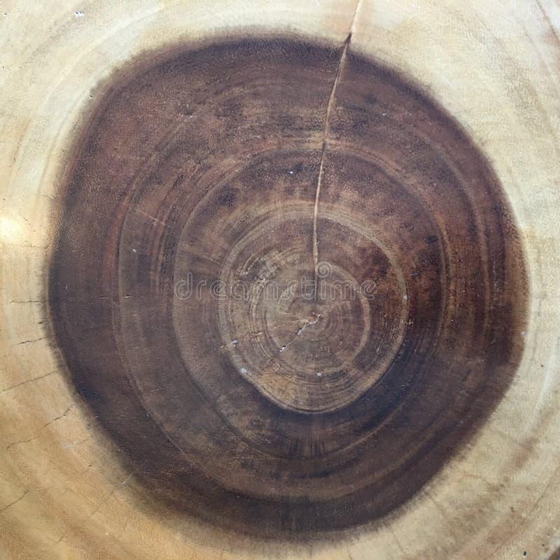 Anneaux annuels d'un arbre de tronc d'arbre scié Texture en bois de fond illustration libre de droits