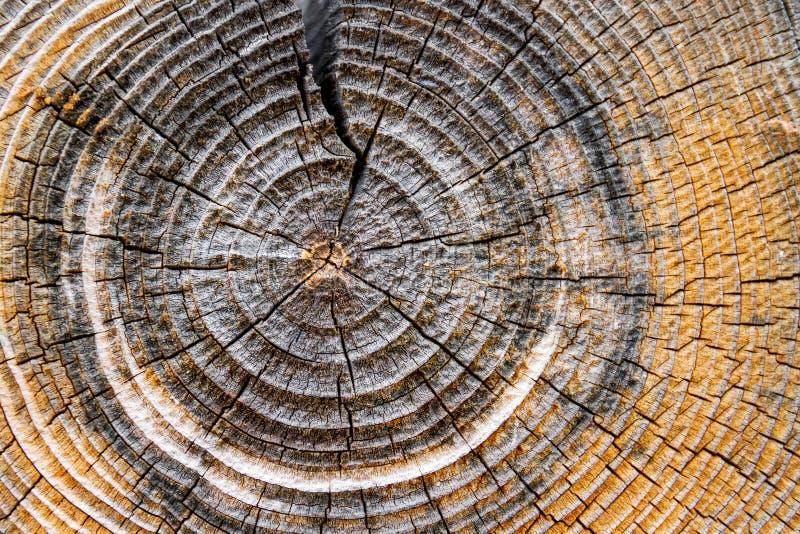 Anneaux d'arbre images stock