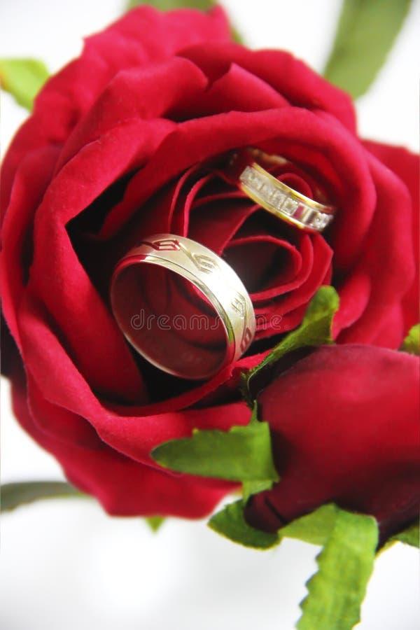 Anneaux d'or de concepteur pour les jeunes mariés sur le leur un jour du mariage photographie stock libre de droits