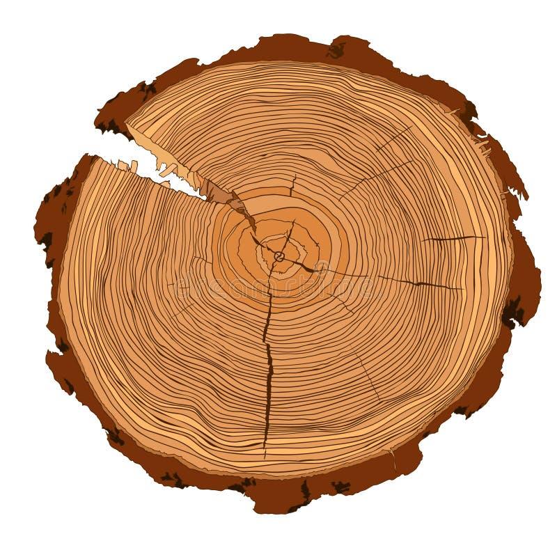 anneaux de croissance annuels d 39 arbre avec le dessin brun de tons de la section transversale d. Black Bedroom Furniture Sets. Home Design Ideas