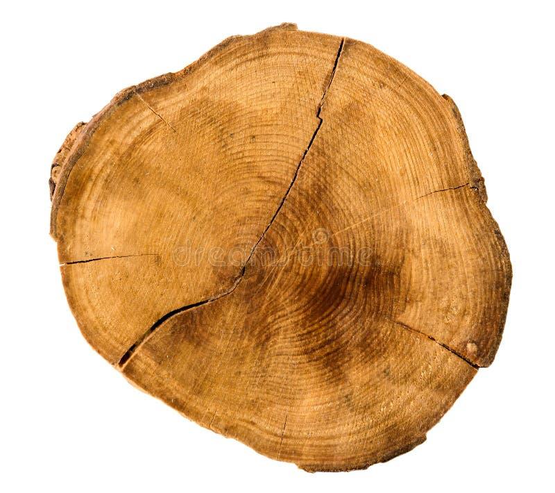 Anneaux de croissance annuels d 39 arbre de la section - Coupe transversale d un tronc d arbre ...
