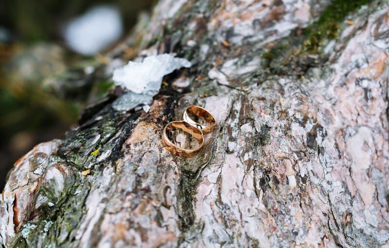 Anneaux de mariage d'or se trouvant sur l'écorce de l'arbre image stock
