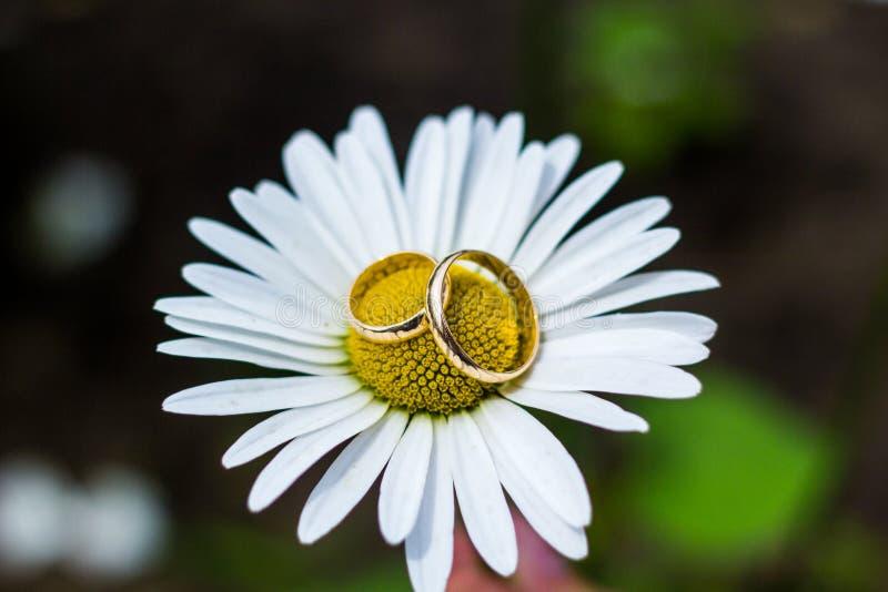 Anneaux de mariage d'or sur le bouquet des fleurs pour la jeune mariée photo stock