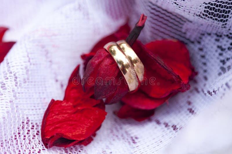 Anneaux de mariage d'or sur les pétales ou les feuilles rouges photographie stock libre de droits
