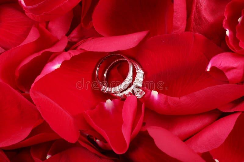Anneaux de mariage dans des pétales de rose rouges photo stock