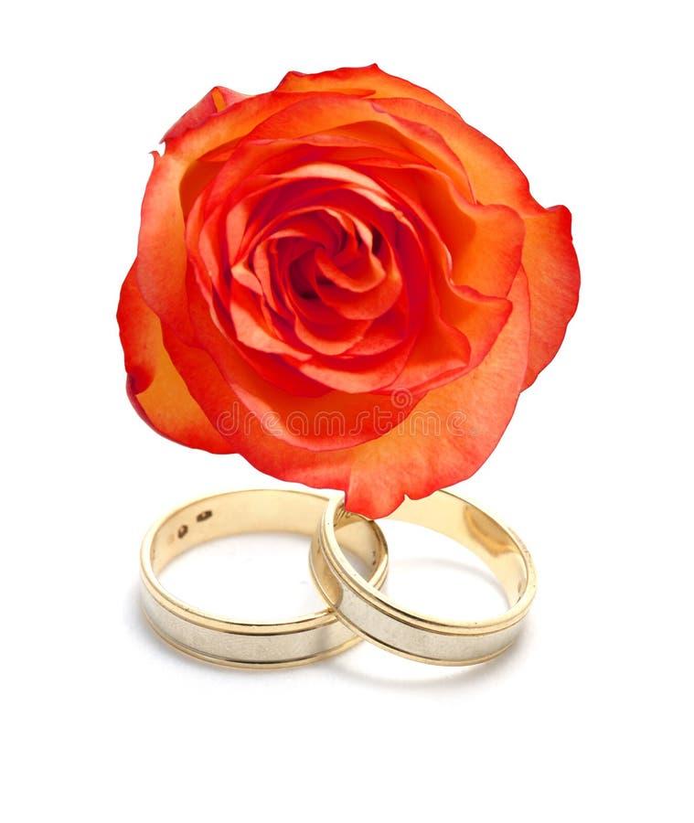 Anneaux de mariage et une rose image libre de droits