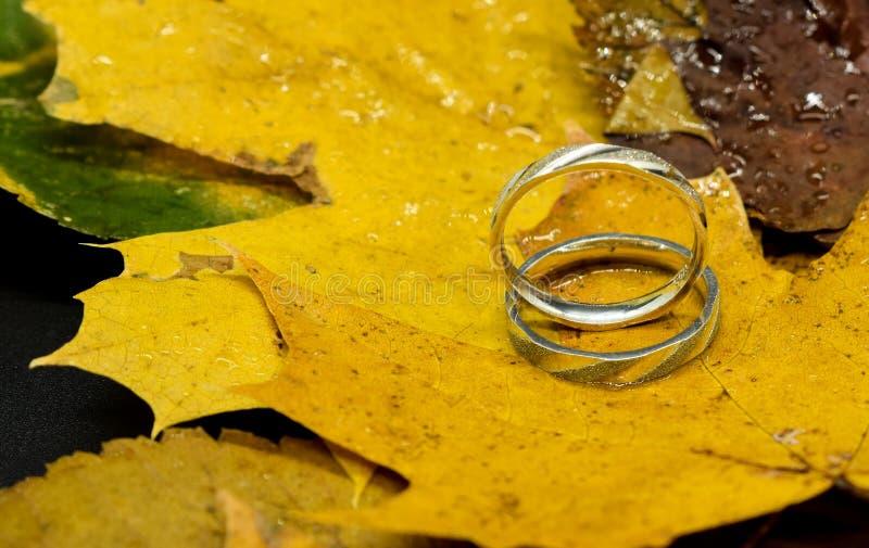 Anneaux de mariage sur le feuillage d'automne Mouillez les lames photographie stock
