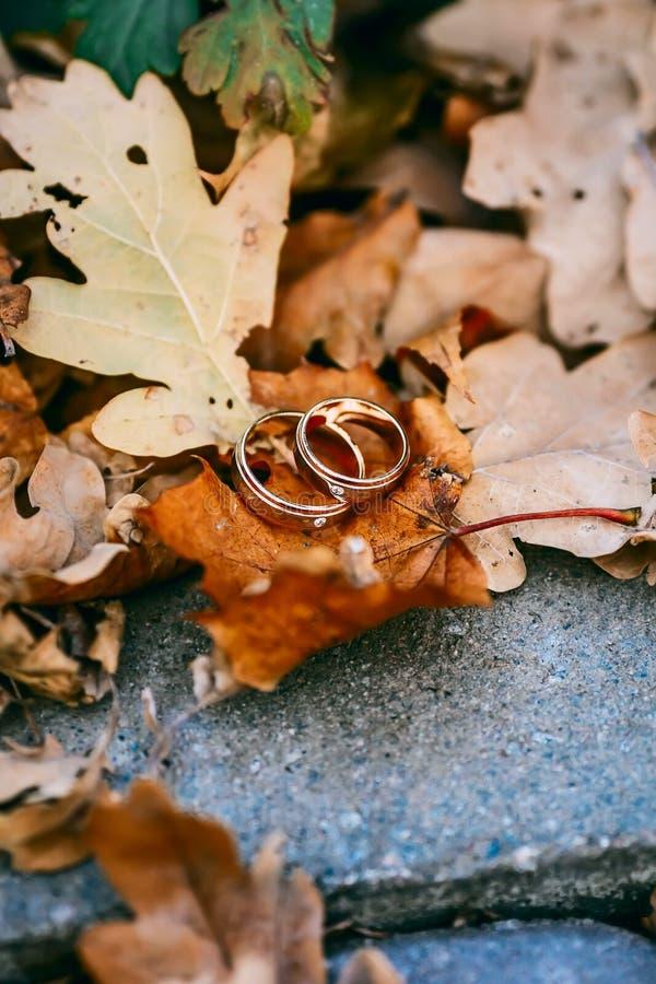 Anneaux de mariage sur le fond de feuillage d'automne photographie stock