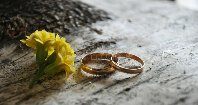 anneaux les épousant et plan rapproché de fleur, mensonge sur un arbre de bouleau image stock