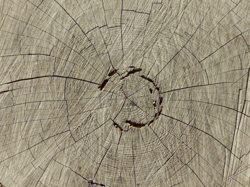 Anneaux sur un tronc d'arbre image stock