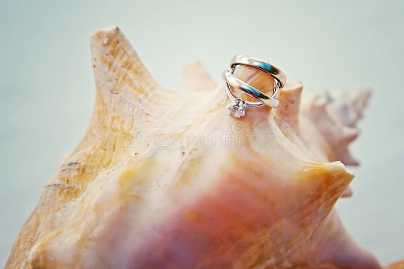 Anneaux tropicaux de mariage et de mariage de coquillage photo stock