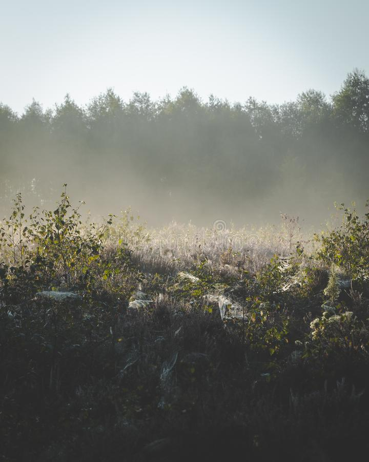 Annebbi aumentare su dalle piante sulla terra in sole di primo mattino fotografia stock