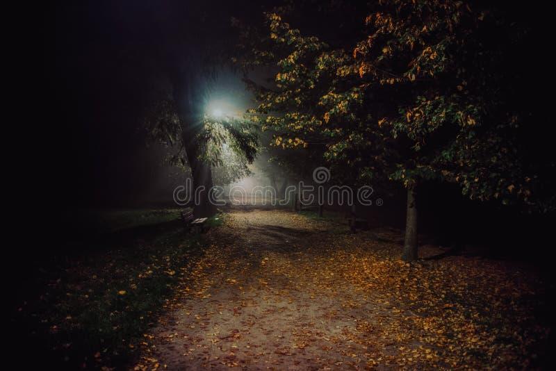 Annebbi nel parco, la notte, il fuoco molle, alto iso fotografia stock