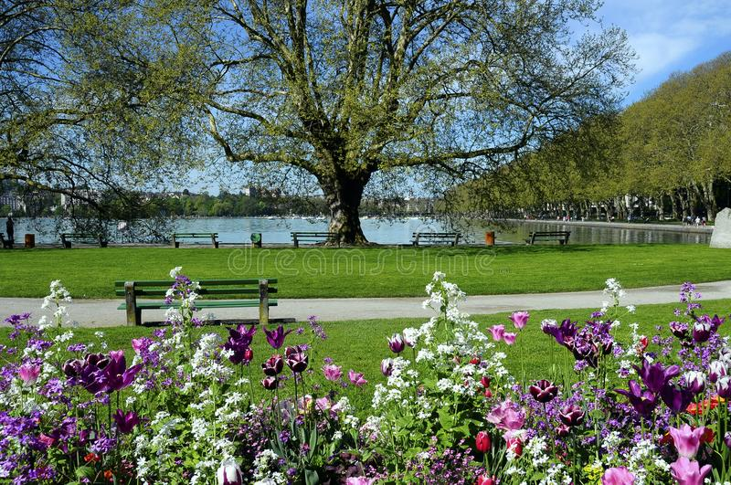 Annecy lake, flowers and city, Savoy, France stock photography