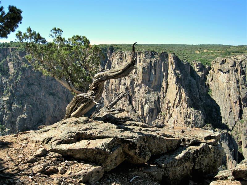 Annerisca il canyon del Gunnison fotografie stock libere da diritti