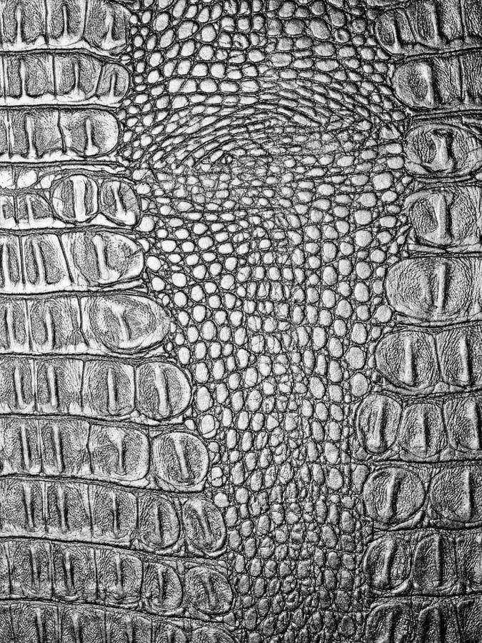 Annerisca il cuoio del coccodrillo. immagine stock