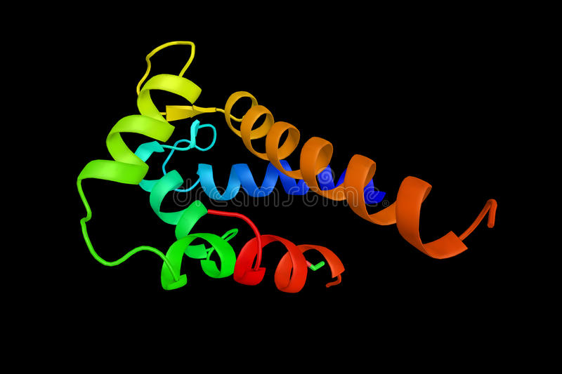 Annexin A1, a protein which inhibits innate immune cells and pro stock images