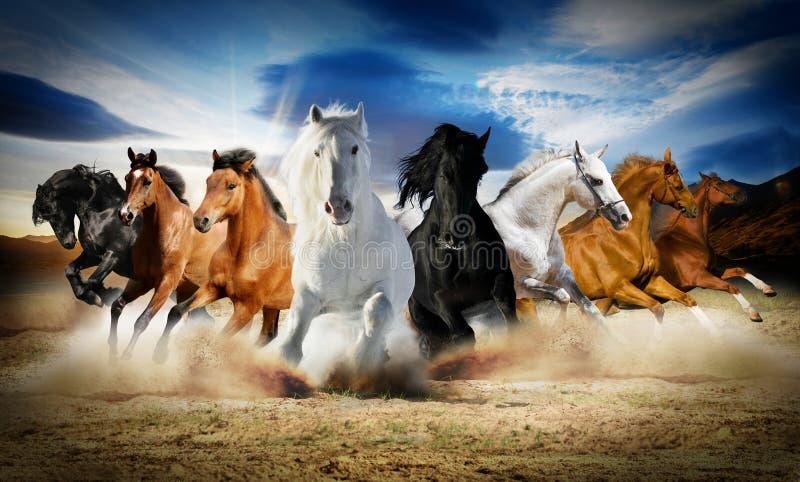 2014 anni di cavallo fotografie stock