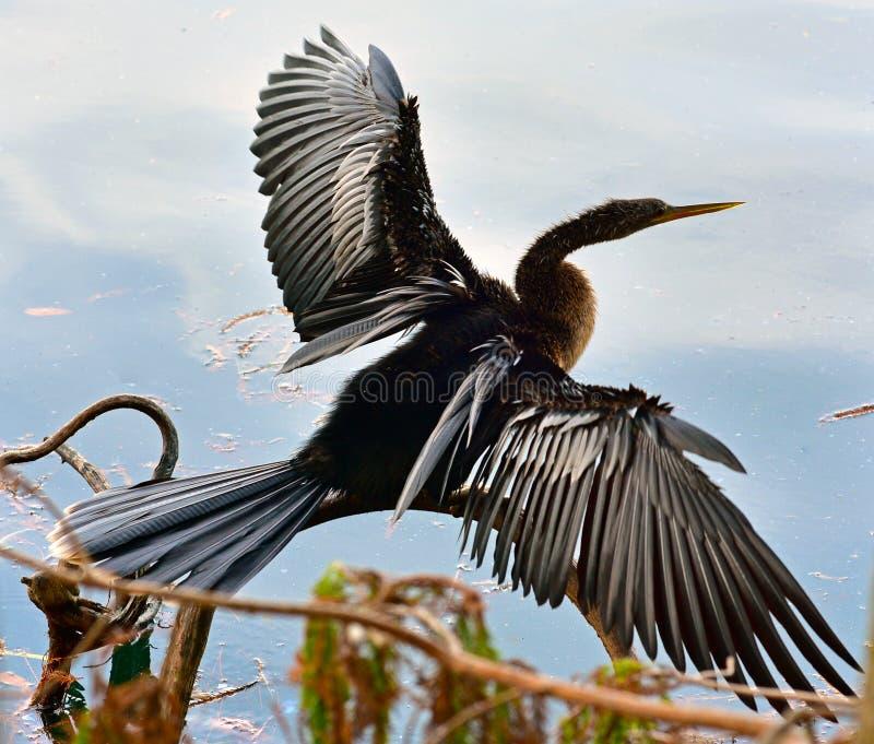 Annninga sur le lac la Floride photo libre de droits