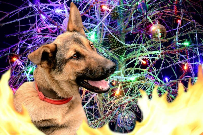 Anno del cane ardente Nuovo anno felice fotografia stock libera da diritti