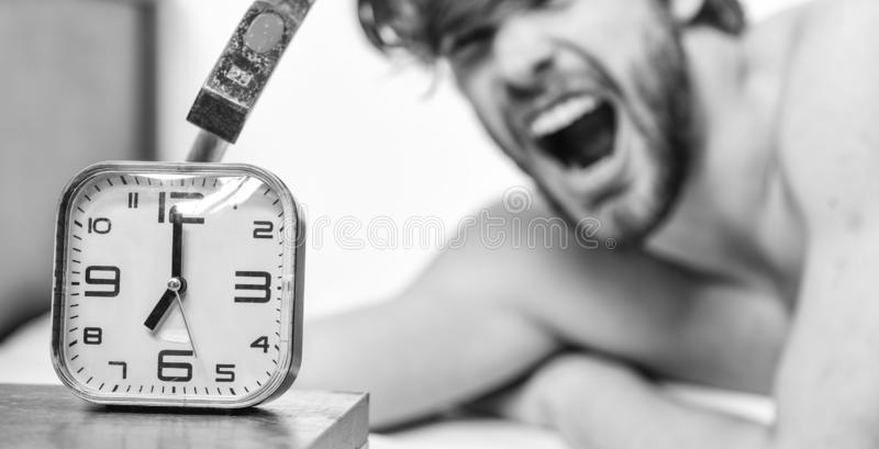 Annoying ringing alarm clock. Man bearded annoyed sleepy face lay pillow near alarm clock. Guy knocking with hammer. Alarm clock ringing. Break discipline royalty free stock photo