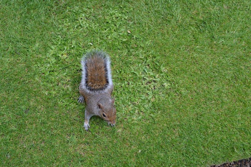 Annoying squirrel stock image