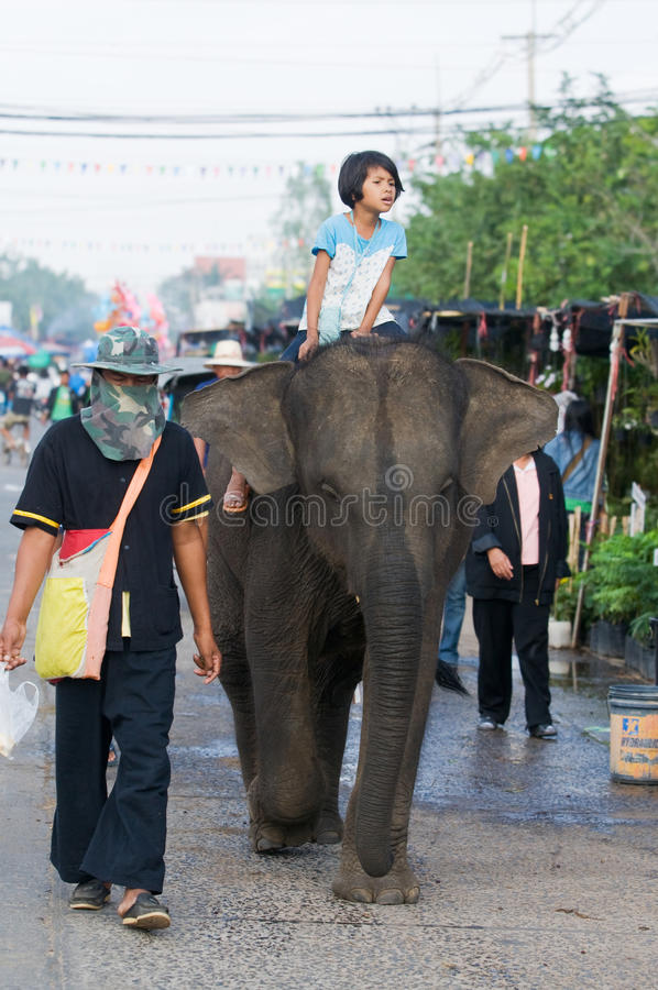 The Annual Elephant Roundup in Surin, Thailand. SURIN - NOVEMBER 21: Girl enjoying a ride on a baby elephant during The Annual Elephant Roundup on November 21 stock photo