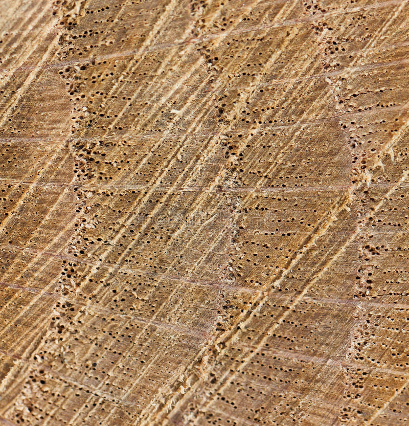 Download Annual growth rings stock image. Image of cross, section - 24482569