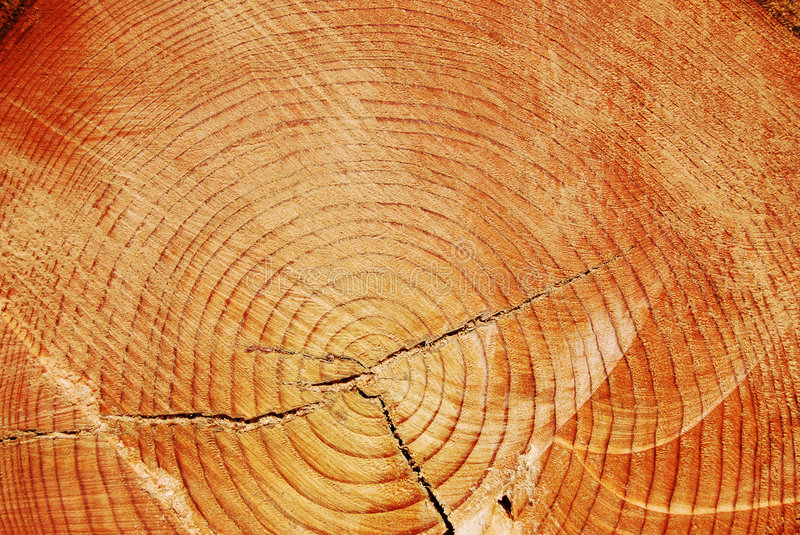 Download Annual ring stock image. Image of ring, plank, shape, material - 9036147