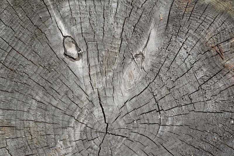 Annual ring - detail of cutted tree stock photo