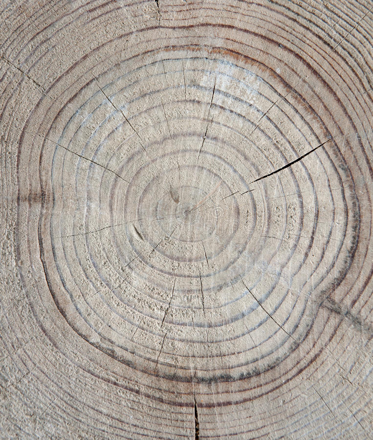 Download Annual rings stock photo. Image of backgrounds, trunk - 16471312
