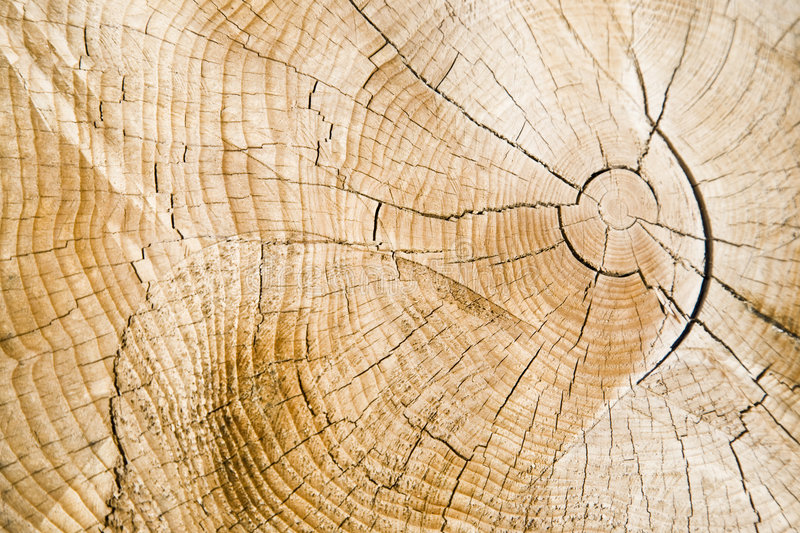 Download Annual rings (AE) stock photo. Image of clearing, felling - 4099792