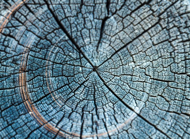 Annual rings of old wood stock photography