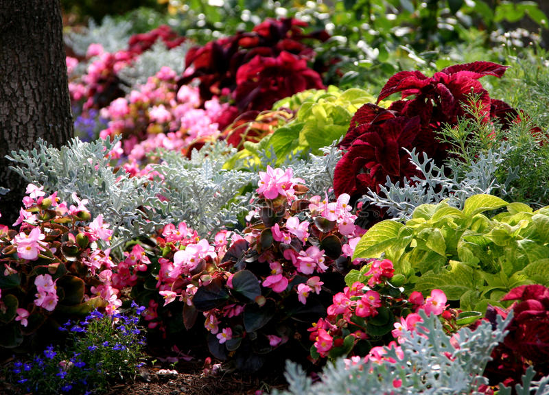 Annual summertime flowers bed. Annual flowers garden bed with begonia, coleus and other ornamental palnts stock images