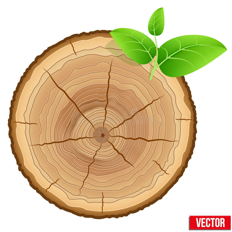Annual tree growth rings of the cross-section wood stock illustration