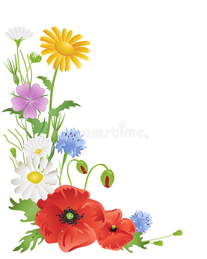 Annual Wildflowers Royalty Free Stock Photo