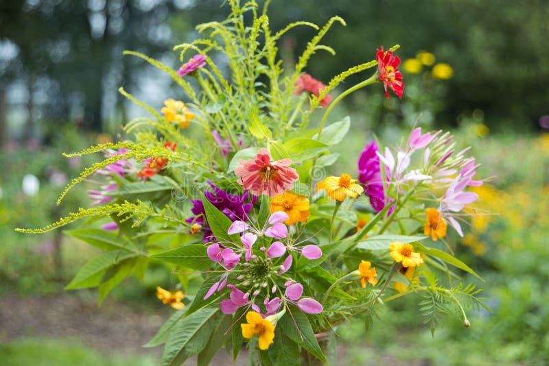 Annuali del mazzo del giardino, Paesi Bassi fotografia stock