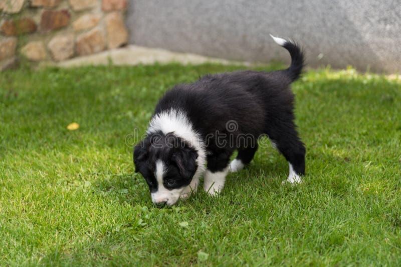 Annusate del cucciolo del cane - primo piano fotografia stock libera da diritti