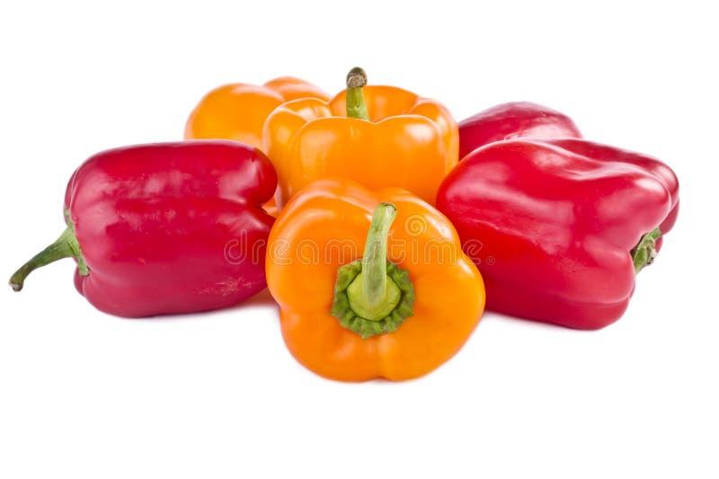 Annuum cultivars för paprika arkivbilder