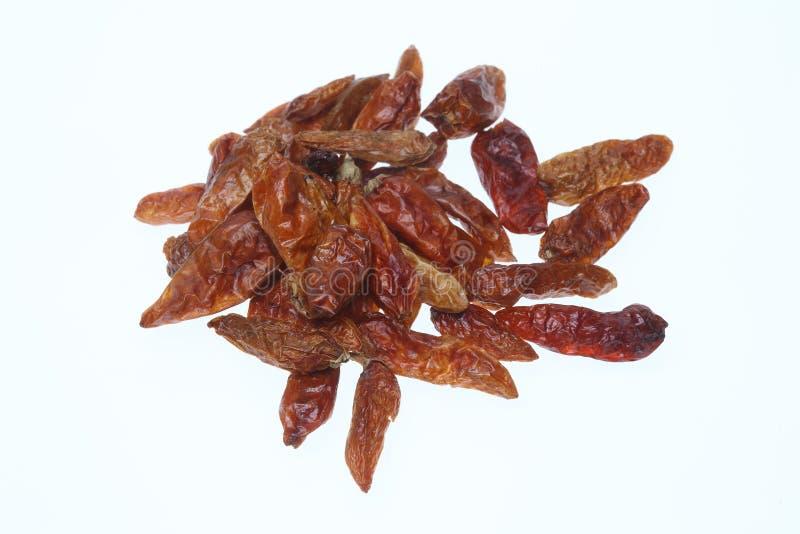 Annuum stil Pequin eller Tepin för chili royaltyfri bild