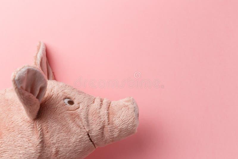 Ano novo do porco no calend?rio chin?s imagem de stock royalty free