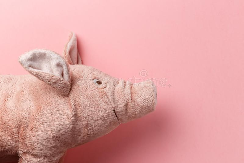 Ano novo do porco no calend?rio chin?s O porco de ano novo no fundo cor-de-rosa Ano novo feliz 2019 anos do porco amarelo da terr fotos de stock royalty free