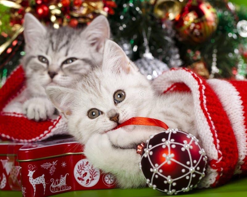 Ano novo dos gatinhos fotos de stock