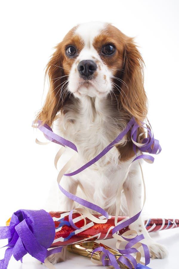 Ano novo feliz ilustre seu trabalho com ilustração do ano novo de spaniel de rei Charles O cão comemora a véspera do ` s do ano n imagem de stock royalty free